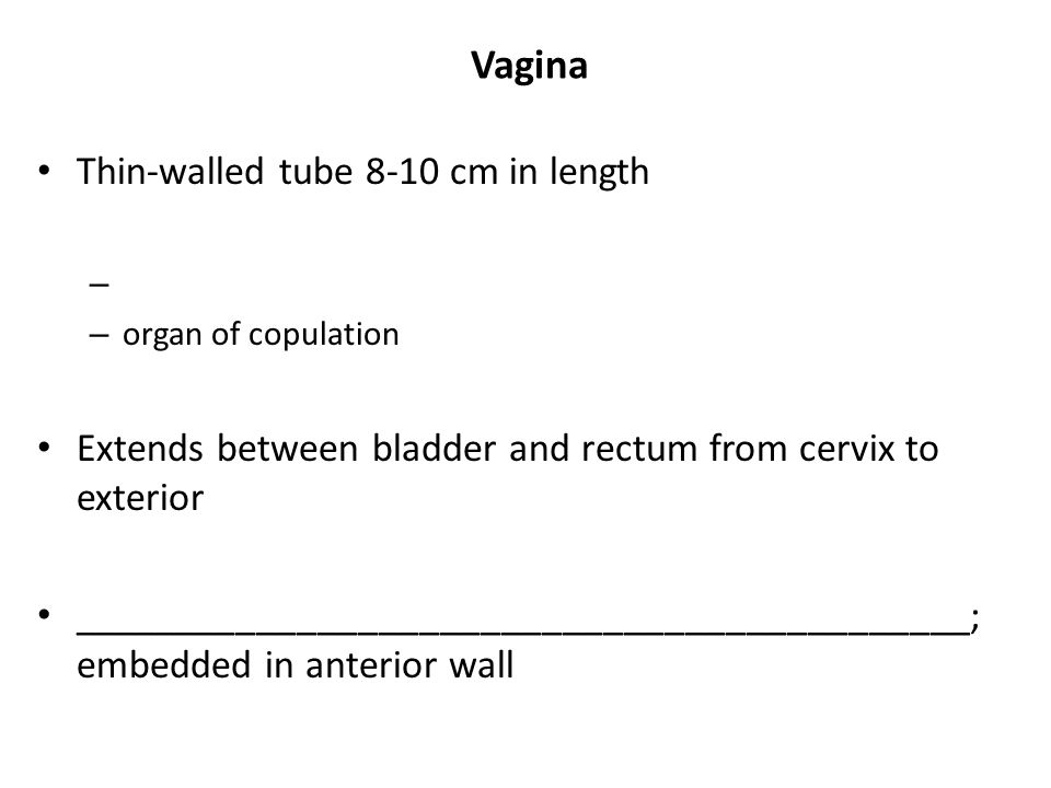 Vagina Thin-walled tube 8-10 cm in length
