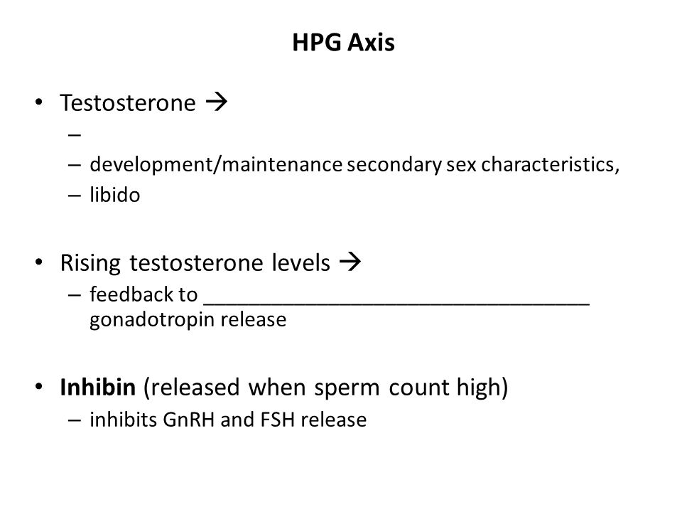 HPG Axis Testosterone  Rising testosterone levels 