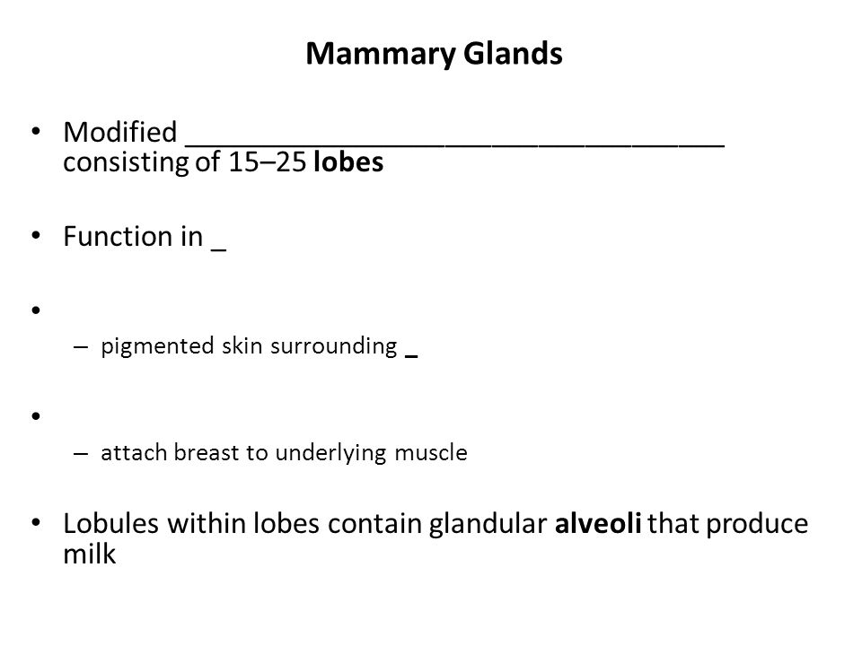 Mammary Glands Modified ___________________________________ consisting of 15–25 lobes. Function in _.
