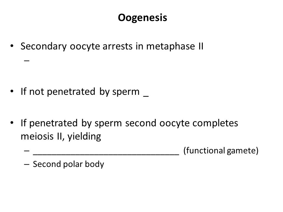 Oogenesis Secondary oocyte arrests in metaphase II