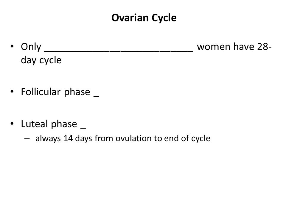 Ovarian Cycle Only ___________________________ women have 28-day cycle