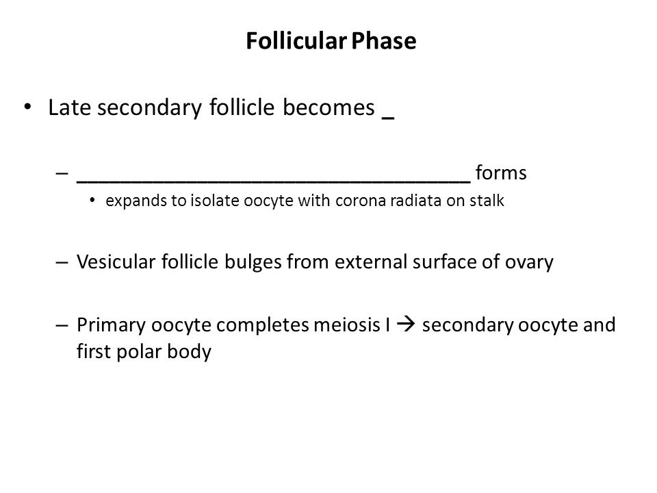 Follicular Phase Late secondary follicle becomes _