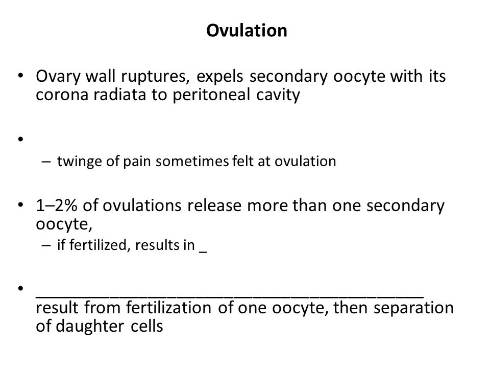 Ovulation Ovary wall ruptures, expels secondary oocyte with its corona radiata to peritoneal cavity.