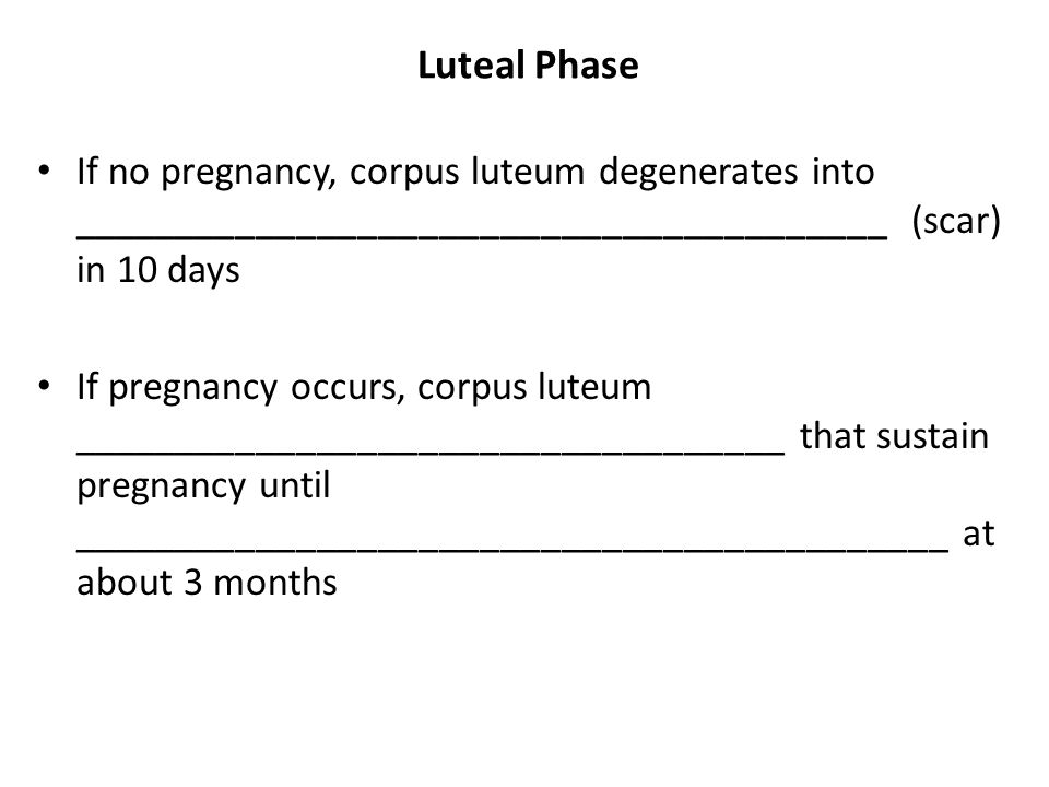 Luteal Phase If no pregnancy, corpus luteum degenerates into ________________________________________ (scar) in 10 days.