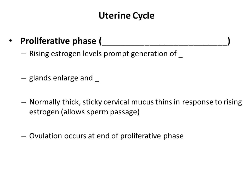 Uterine Cycle Proliferative phase (__________________________)