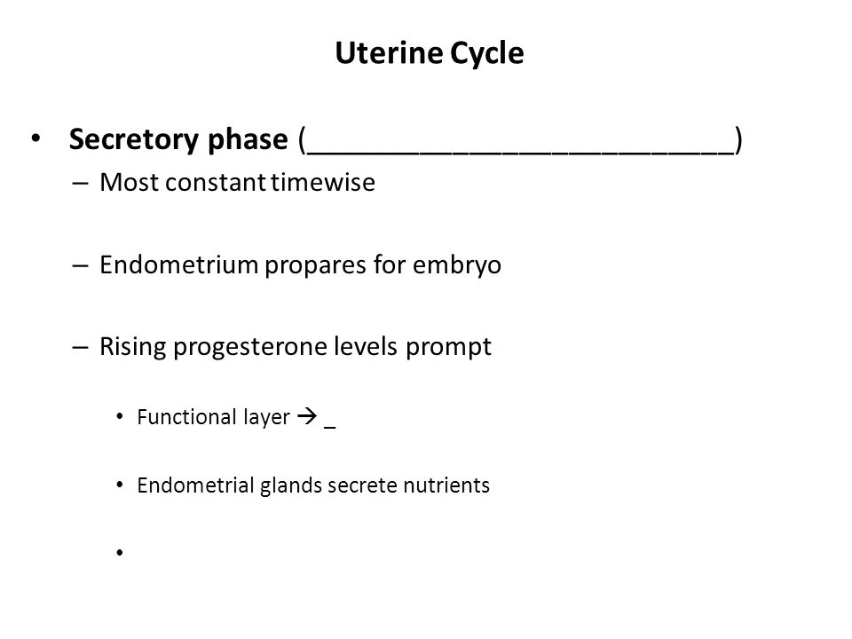 Uterine Cycle Secretory phase (__________________________)