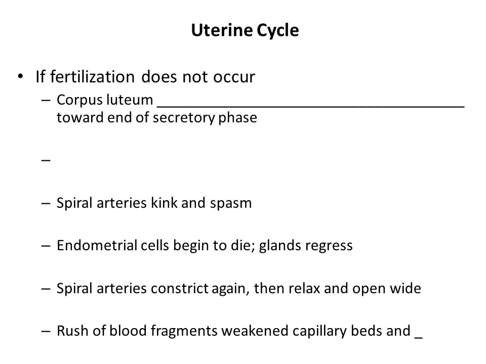 Uterine Cycle If fertilization does not occur
