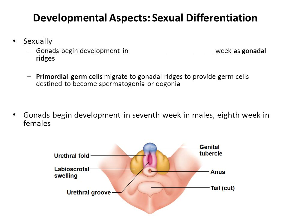 Developmental Aspects: Sexual Differentiation