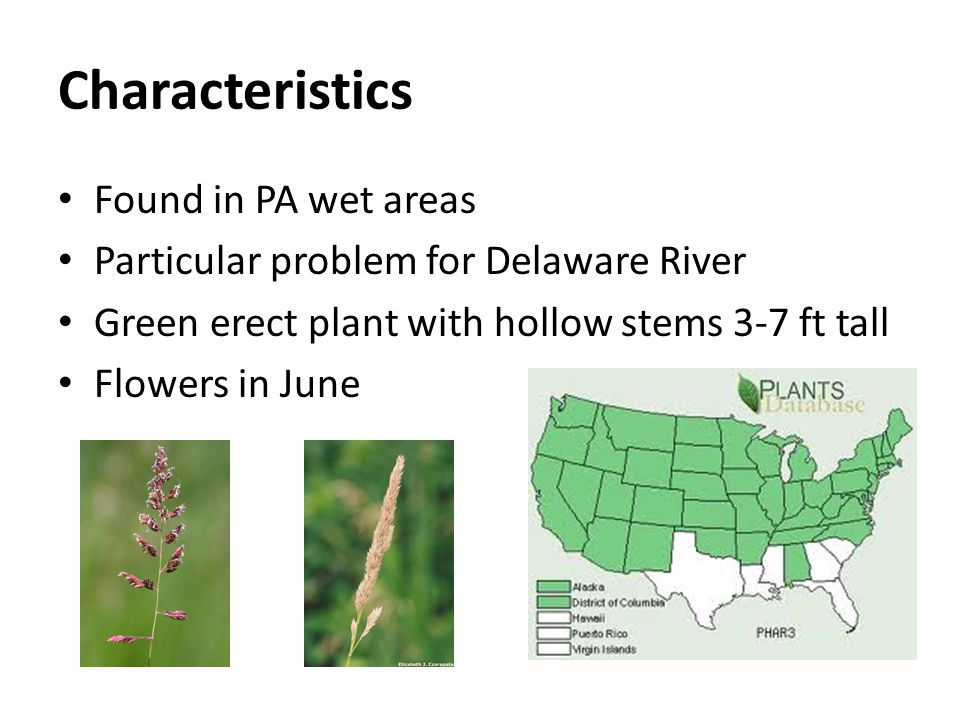 Characteristics Found in PA wet areas