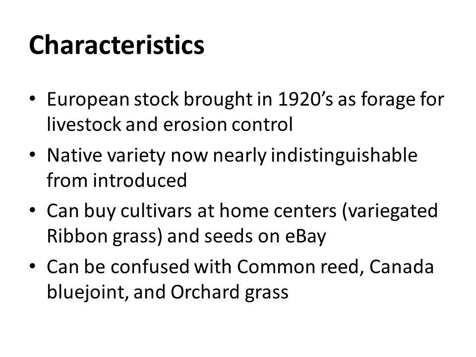 Characteristics European stock brought in 1920's as forage for livestock and erosion control.
