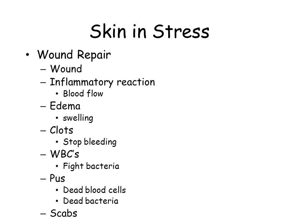 Skin in Stress Wound Repair Wound Inflammatory reaction Edema Clots