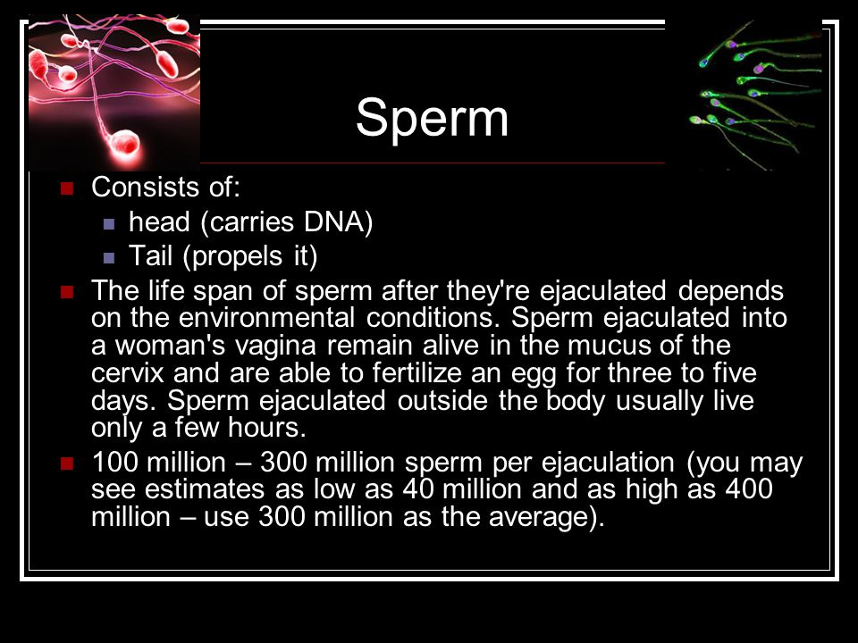 Sperm Consists of: head (carries DNA) Tail (propels it)