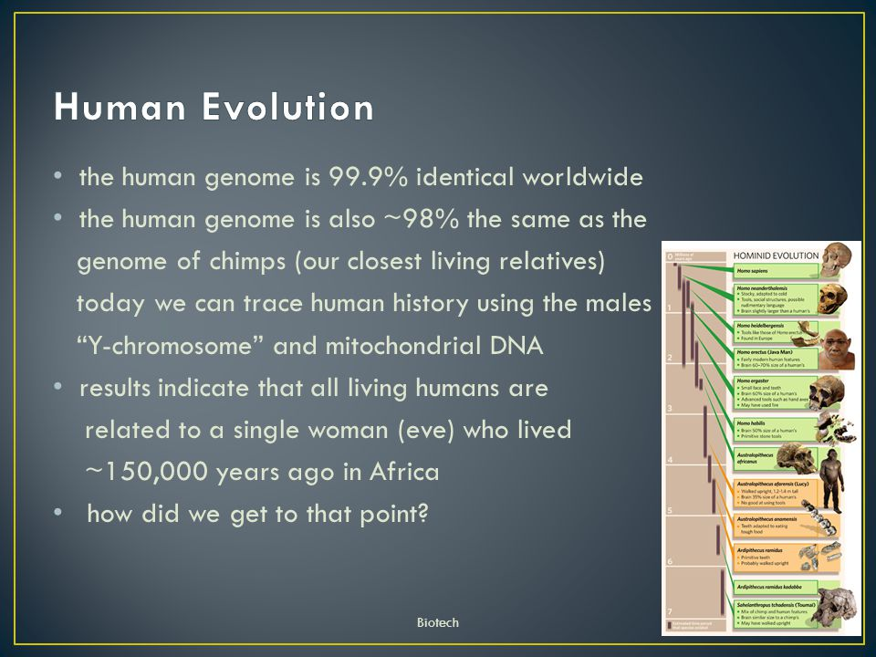 Human Evolution the human genome is 99.9% identical worldwide