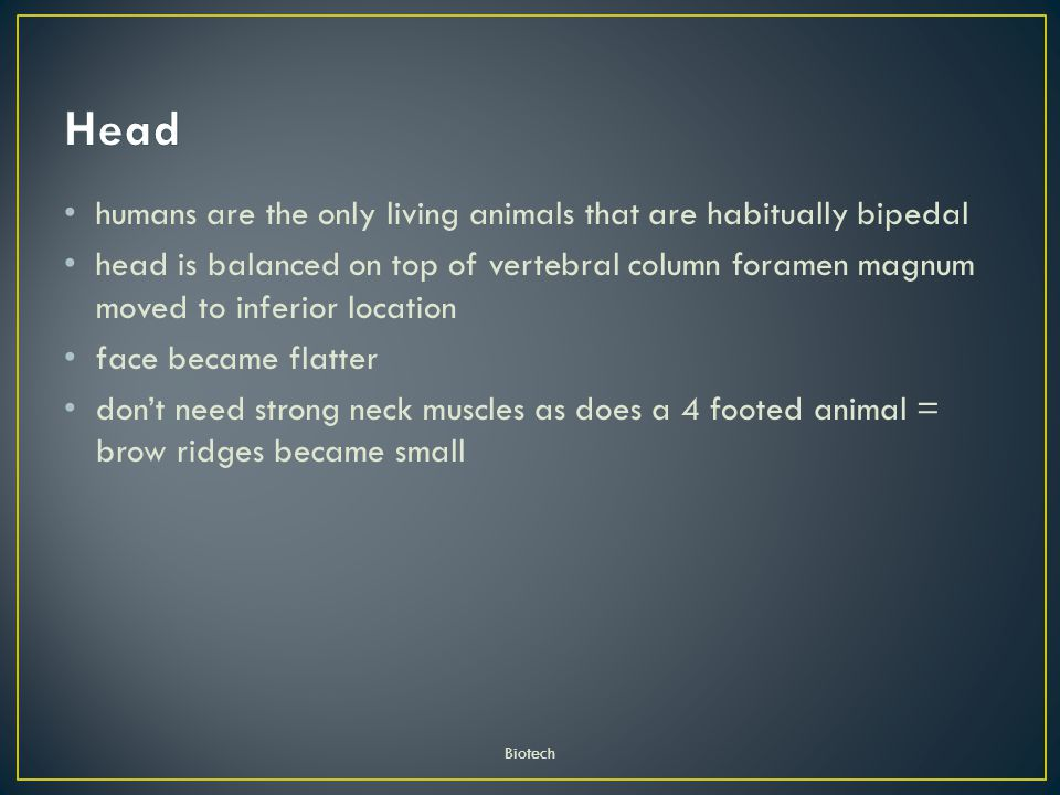 Head humans are the only living animals that are habitually bipedal