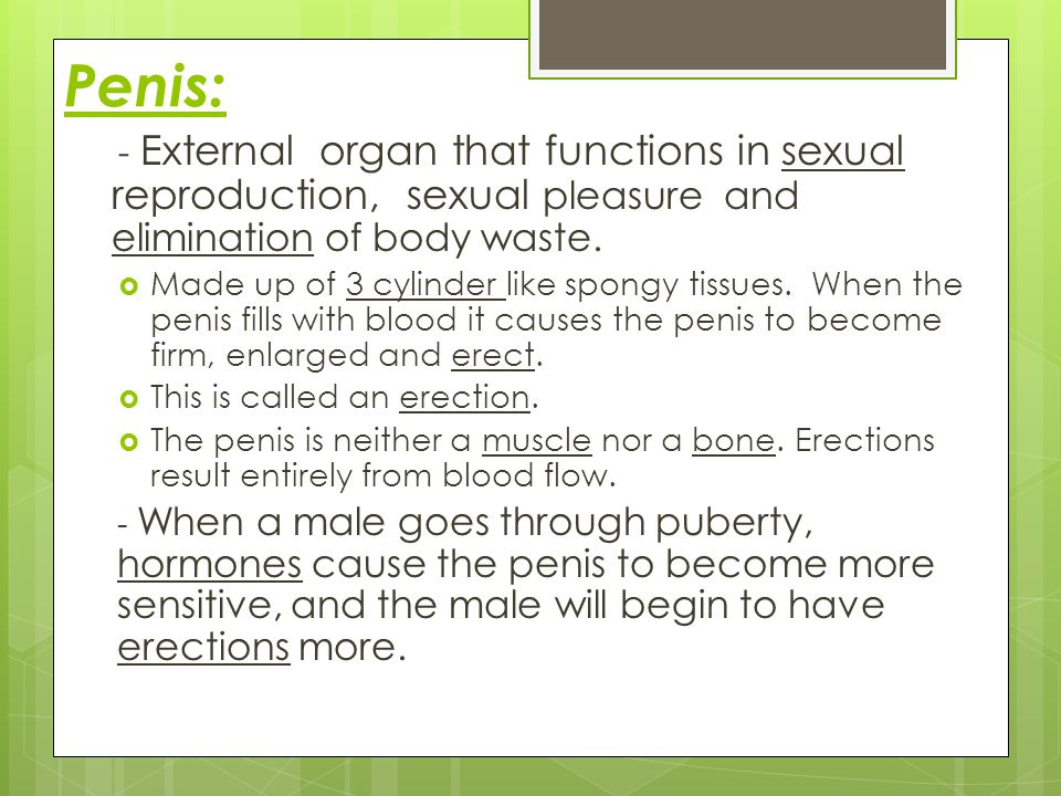 Penis: - External organ that functions in sexual reproduction, sexual pleasure and elimination of body waste.