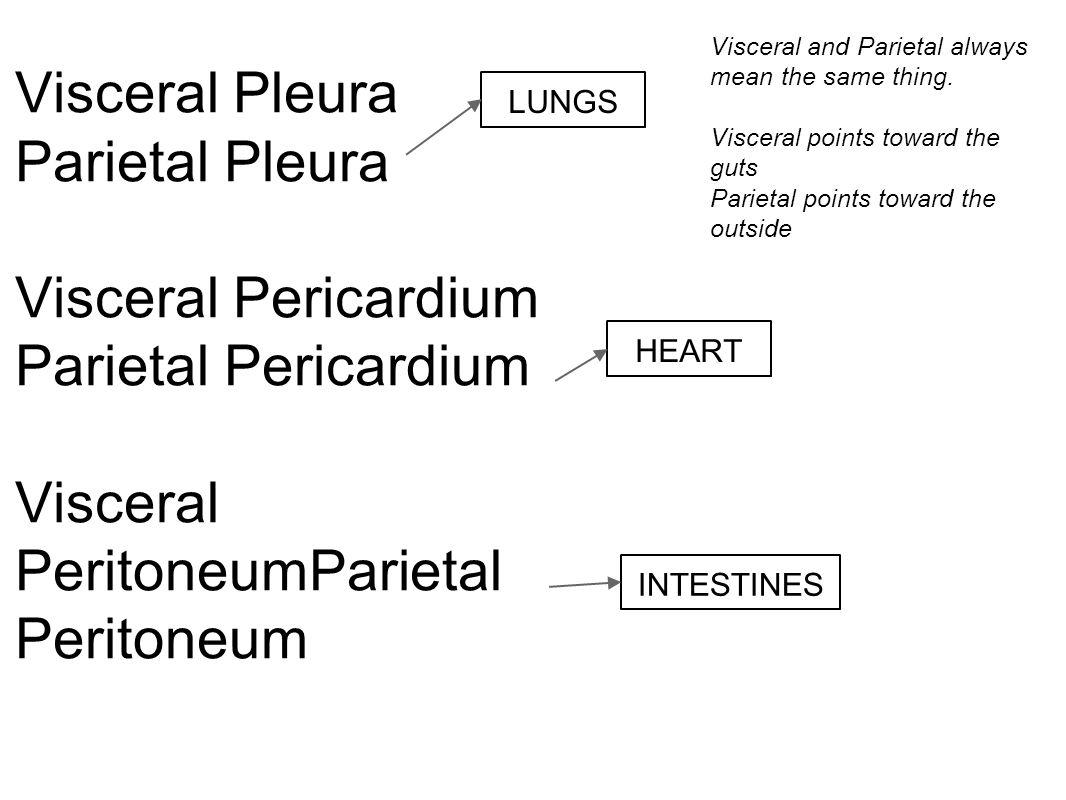 worksheet. Anatomical Terminology Worksheet. Worksheet Fun Worksheet ...