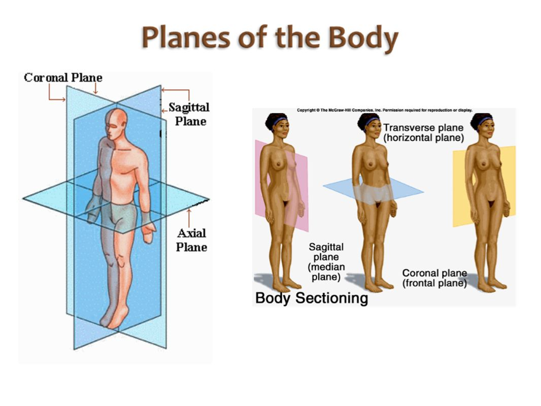 Homework: Fill out the chart on the body regions