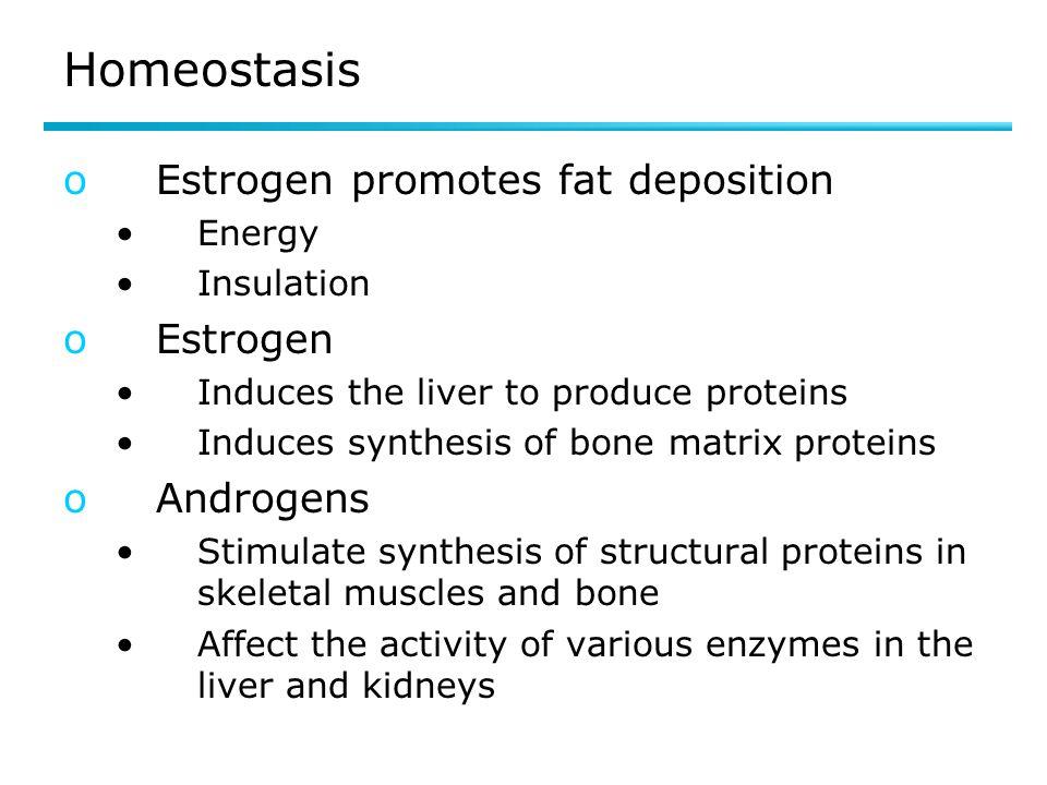 Homeostasis Estrogen promotes fat deposition Estrogen Androgens Energy