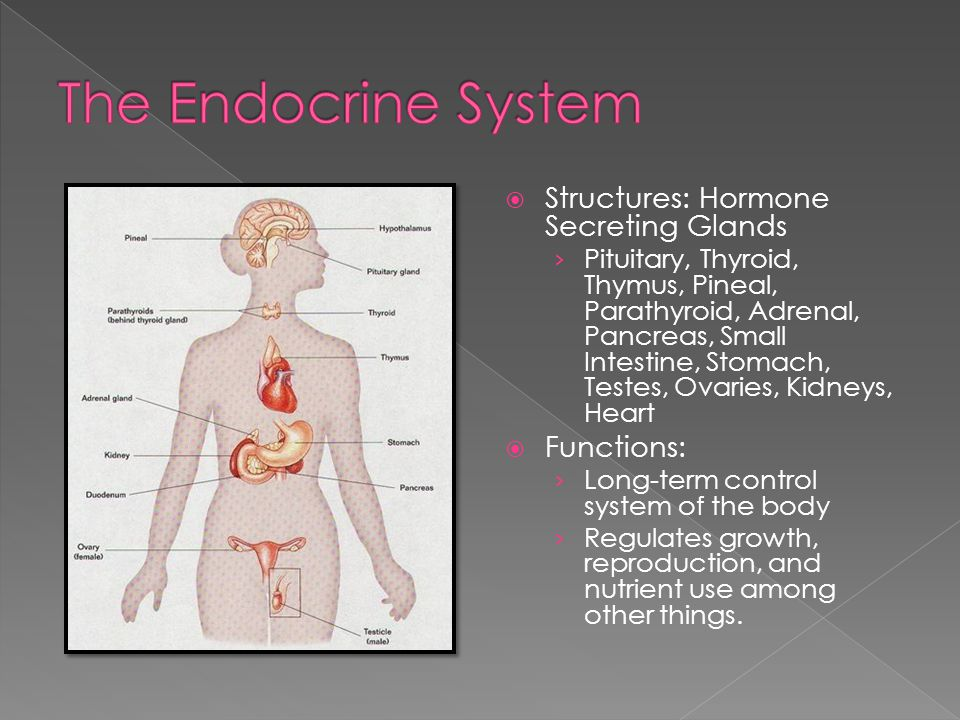 The Endocrine System Structures: Hormone Secreting Glands Functions: