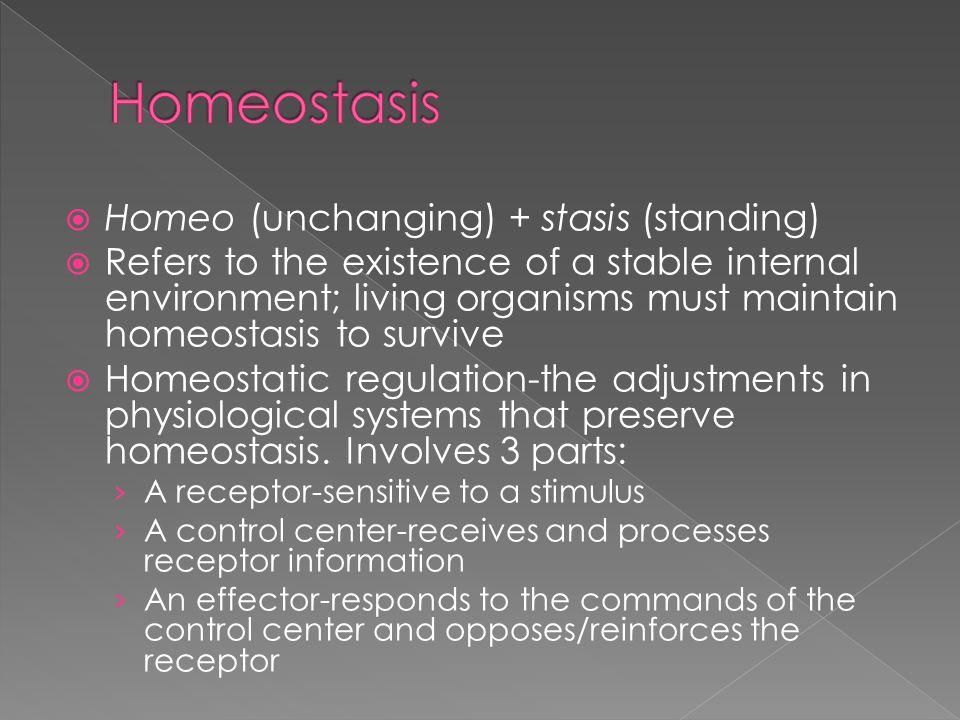 Homeostasis Homeo (unchanging) + stasis (standing)