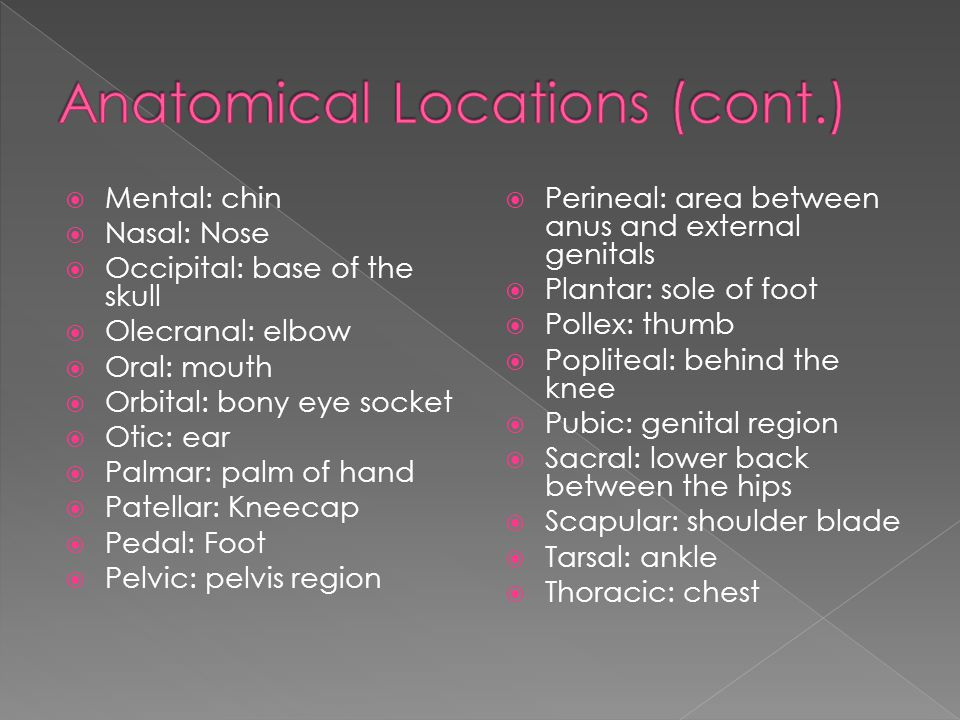 Anatomical Locations (cont.)