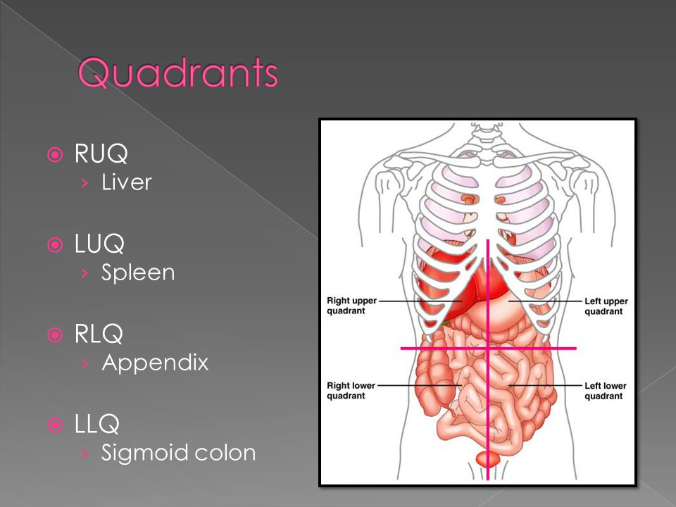 Quadrants RUQ Liver LUQ Spleen RLQ Appendix LLQ Sigmoid colon
