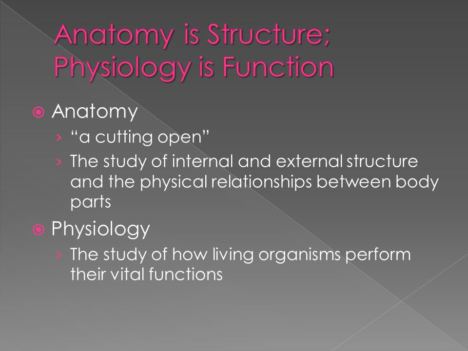 Anatomy is Structure; Physiology is Function