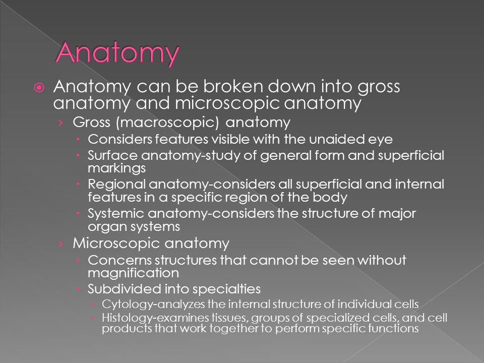 Gross and microscopic anatomy