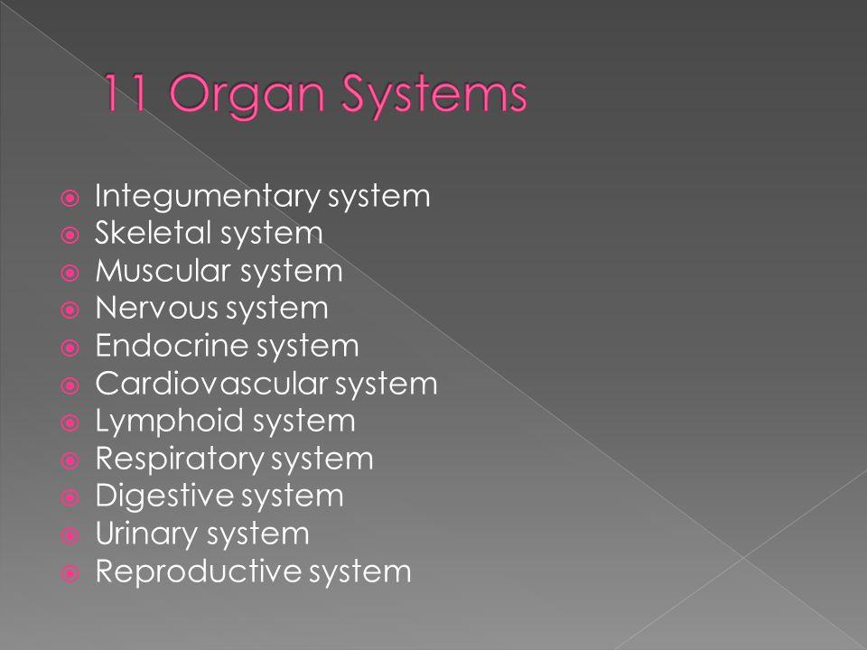 11 Organ Systems Integumentary system Skeletal system Muscular system