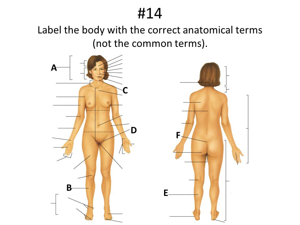 #14 Label the body with the correct anatomical terms (not the common terms).