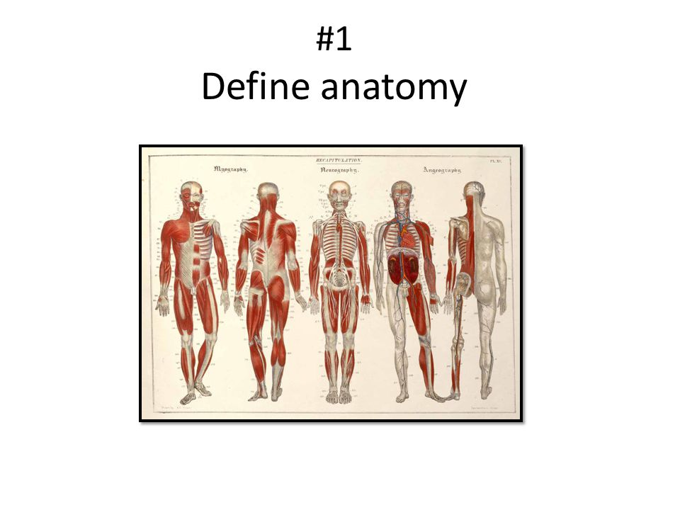 #1 Define anatomy
