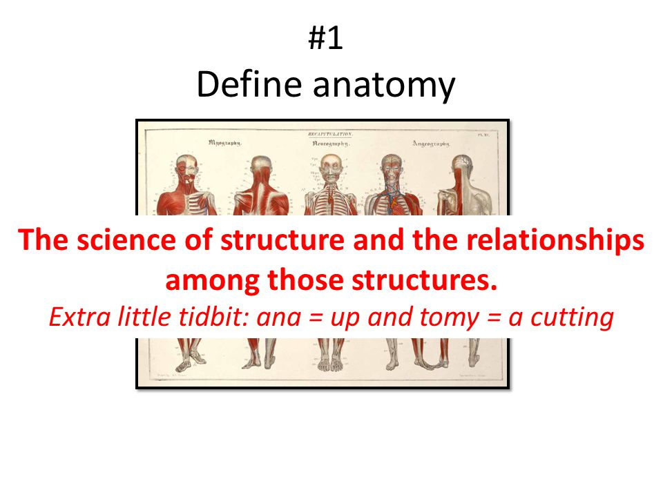 The science of structure and the relationships among those structures.