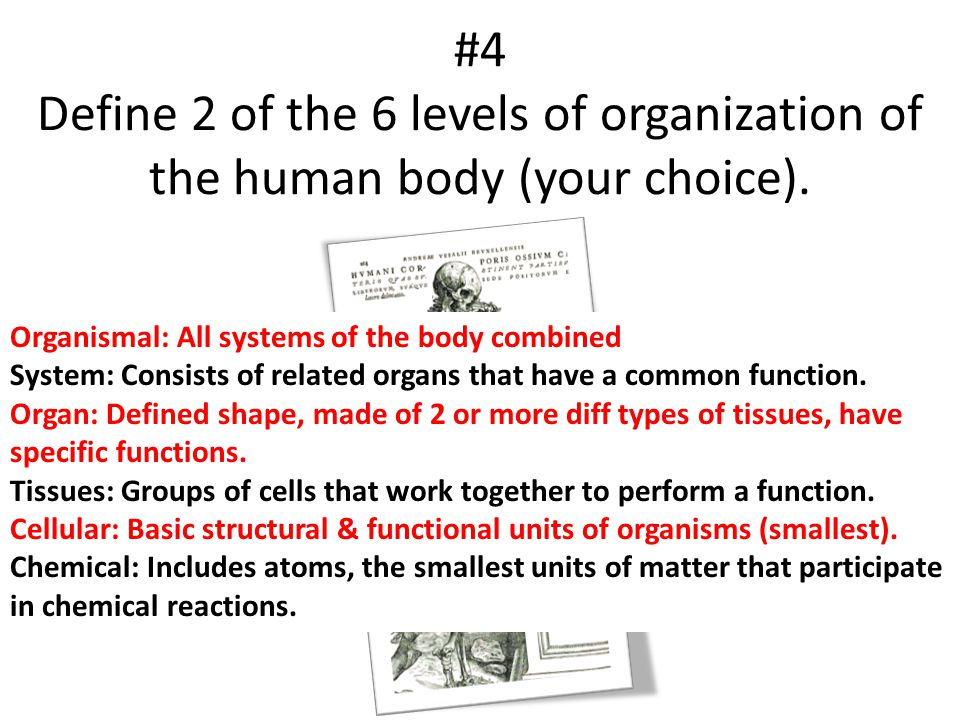 #4 Define 2 of the 6 levels of organization of the human body (your choice).