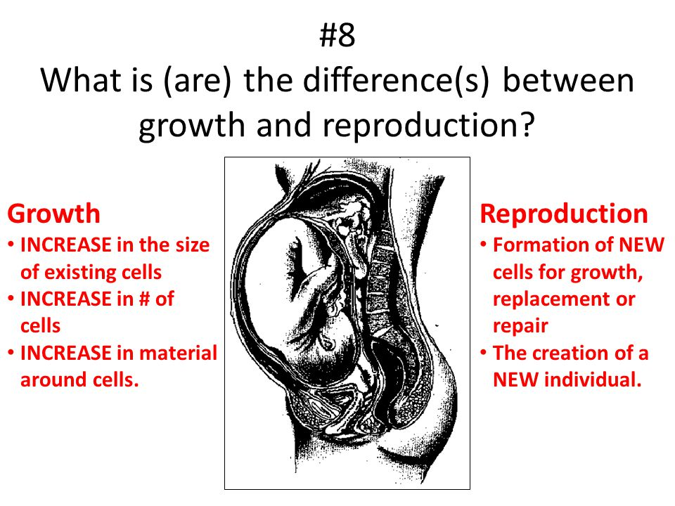 #8 What is (are) the difference(s) between growth and reproduction