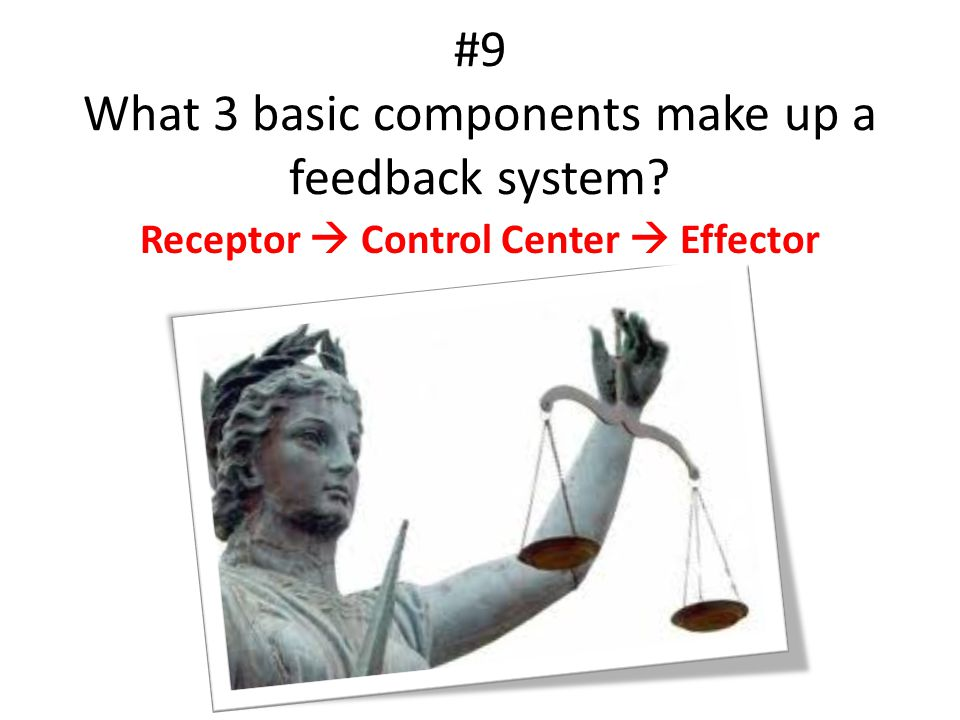 #9 What 3 basic components make up a feedback system