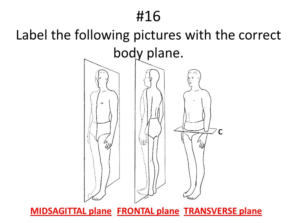 #16 Label the following pictures with the correct body plane.