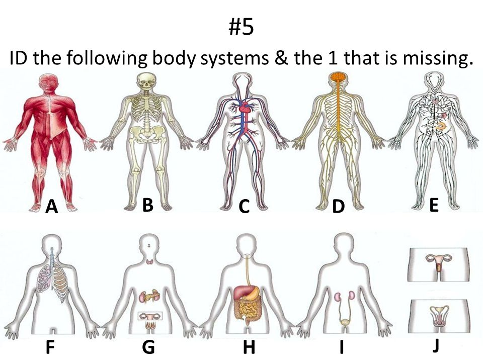 #5 ID the following body systems & the 1 that is missing.