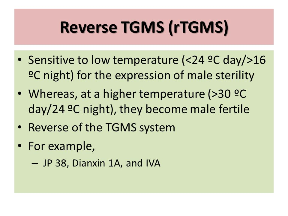 Reverse TGMS (rTGMS) Sensitive to low temperature (<24 ºC day/>16 ºC night) for the expression of male sterility.