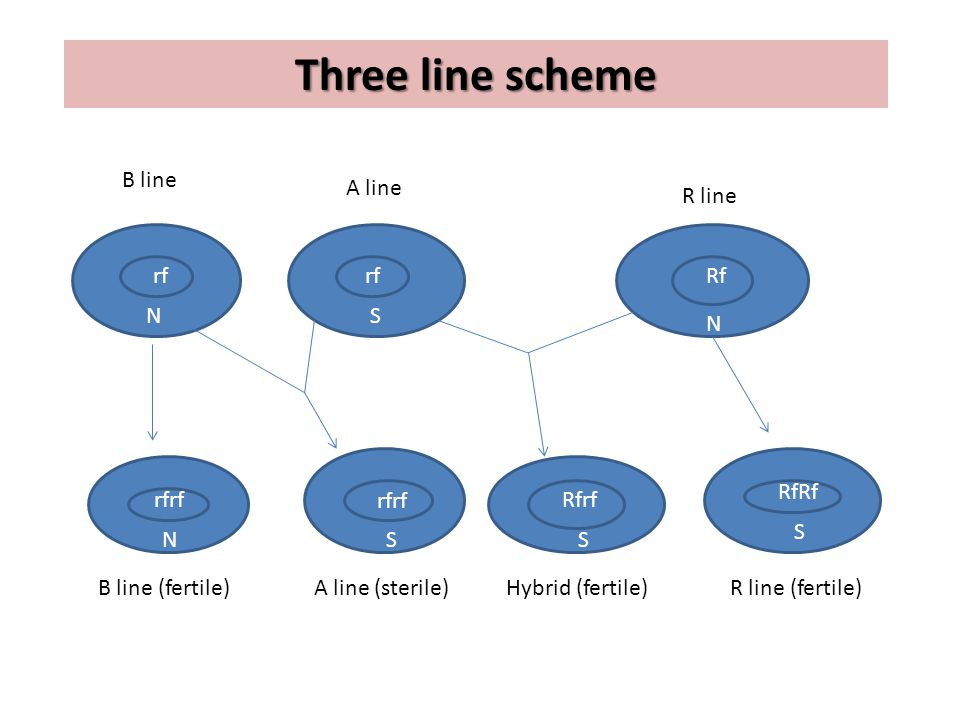 Three line scheme B line A line rf rfrf B line (fertile)