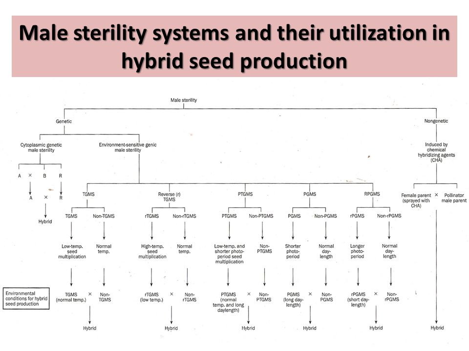 Male sterility systems and their utilization in hybrid seed production