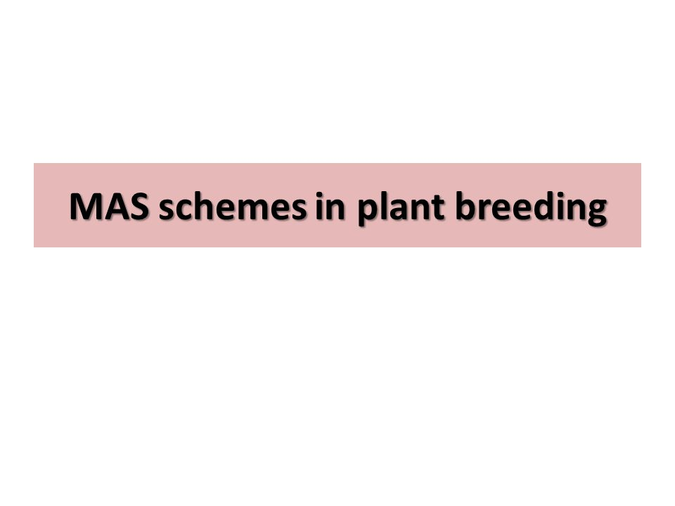 MAS schemes in plant breeding