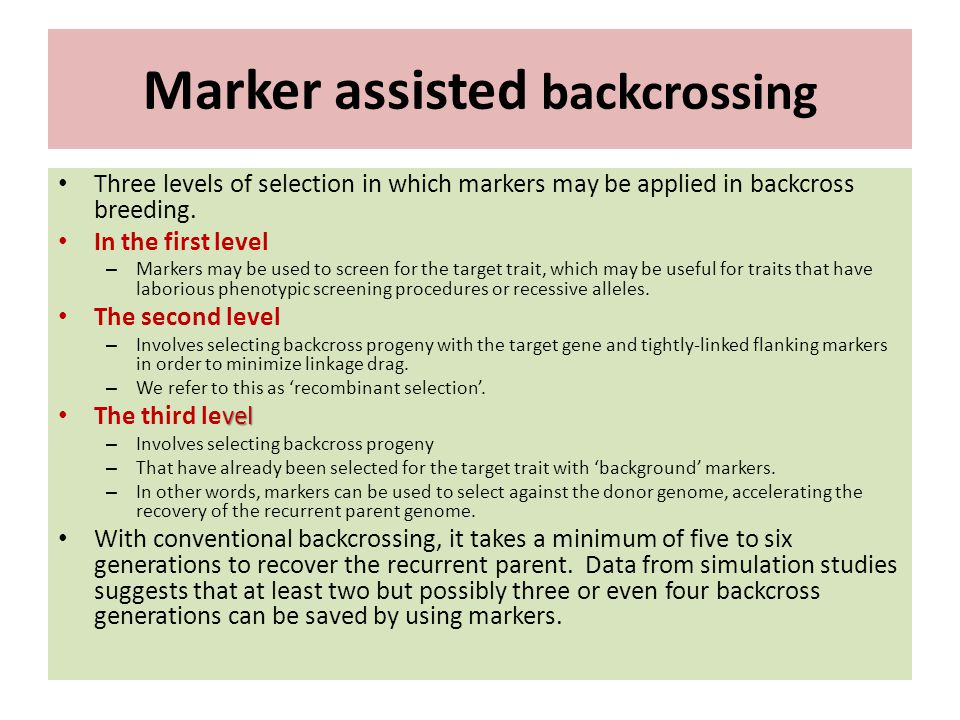 Marker assisted backcrossing