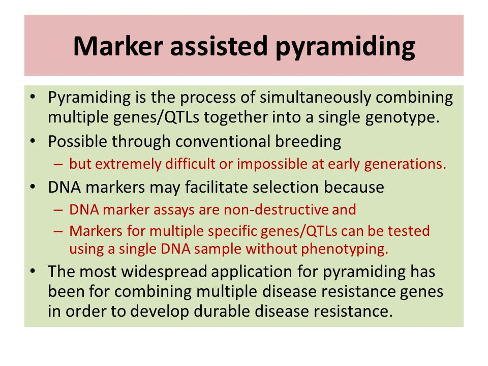 Marker assisted pyramiding