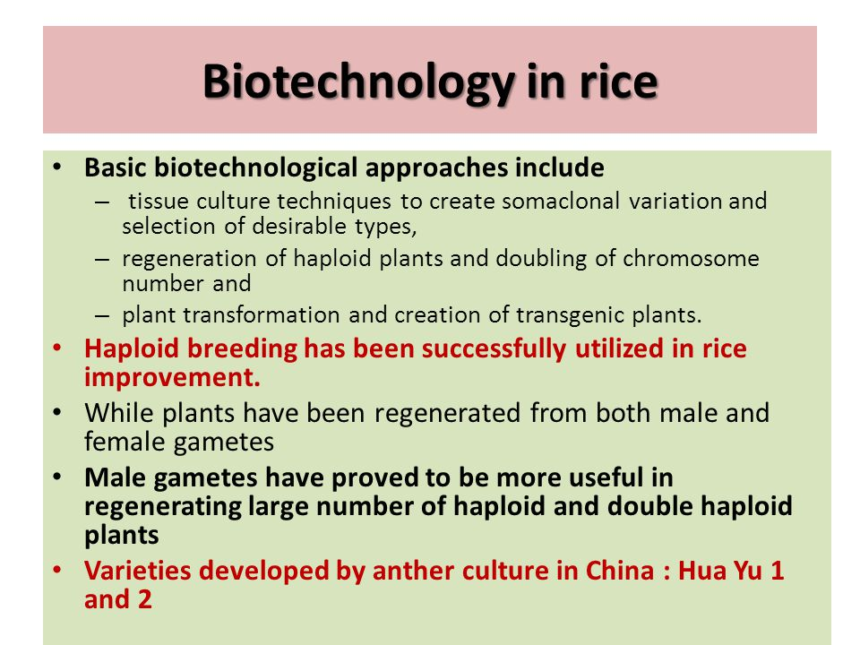 Biotechnology in rice Basic biotechnological approaches include