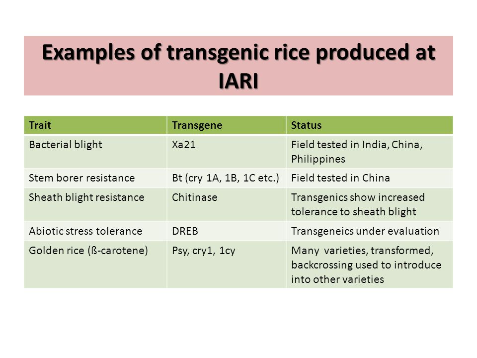 Examples of transgenic rice produced at IARI