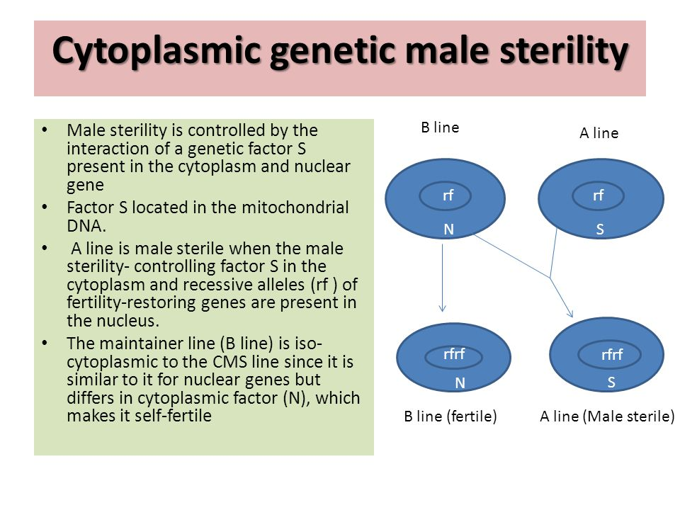 Cytoplasmic genetic male sterility