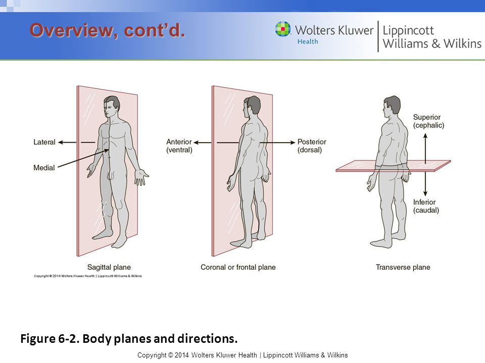 Overview, cont'd. Figure 6-2. Body planes and directions.