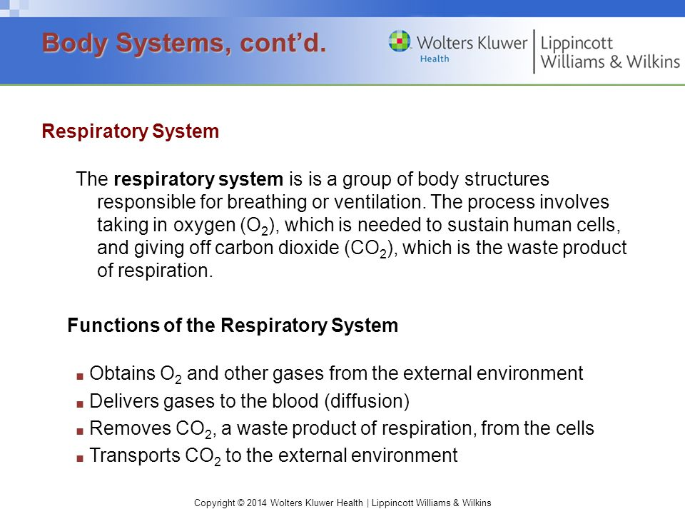 Body Systems, cont'd. Respiratory System