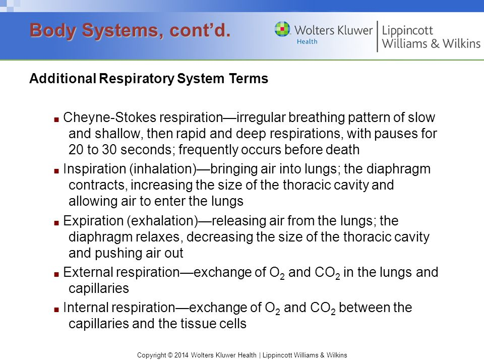 Body Systems, cont'd. Additional Respiratory System Terms