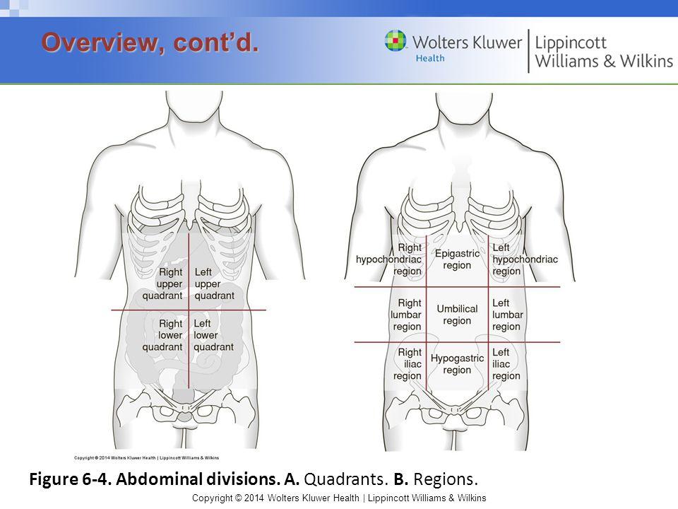 Overview, cont'd. Figure 6-4. Abdominal divisions. A. Quadrants. B. Regions.